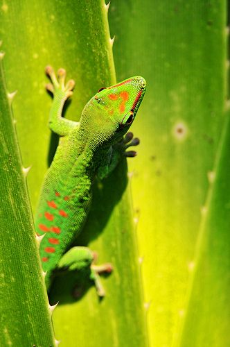 Gecko on tropical leaves