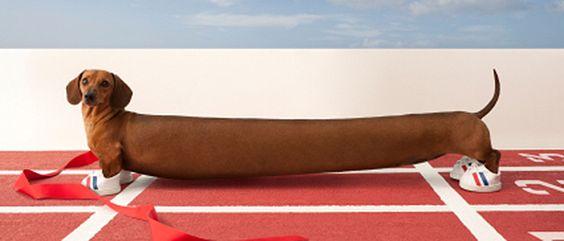 World S Longest Sausage Dog