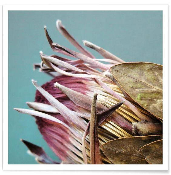 Protea Afrikana en Affiche premium par Ballack Art House | JUNIQE