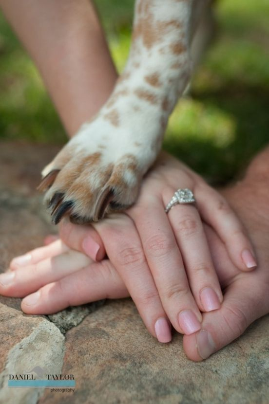 Sweet photo of this couple's dog during their engagement shoot! Daniel Taylor Photography