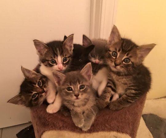 Cats - So Cute