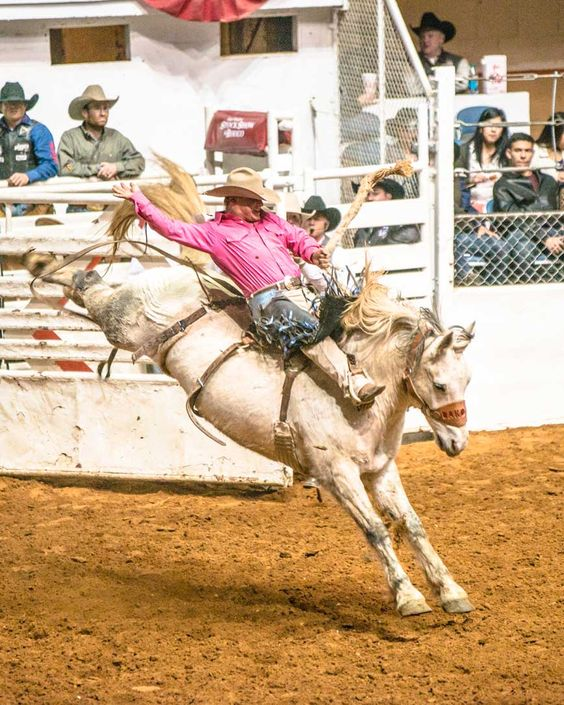 Bareback rider at Fort Worth Stock Show Rodeo