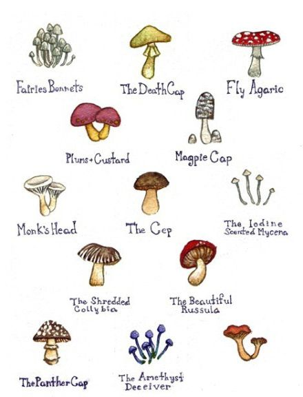 fungi research paper