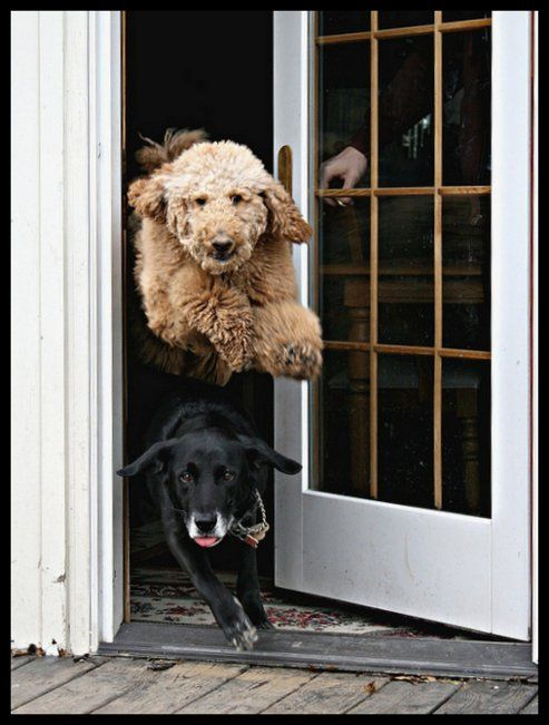 Here we come!: The Doors, Dogs, Cute Animals, Funny Animal, Go Outside, Dog S, Man S, Furry Friends