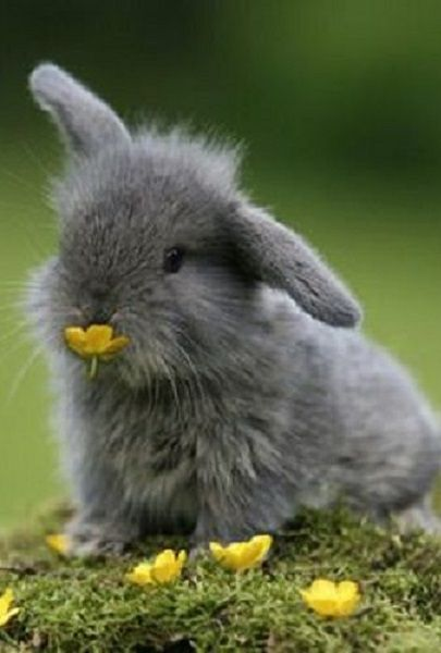 ♥ Small Pets ♥ Spring bunny..