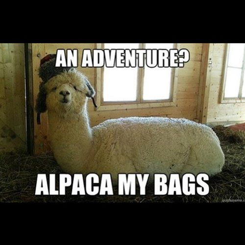 Who wouldn't want to go on an adventure with an alpaca? Source: Instagram user xanthe93