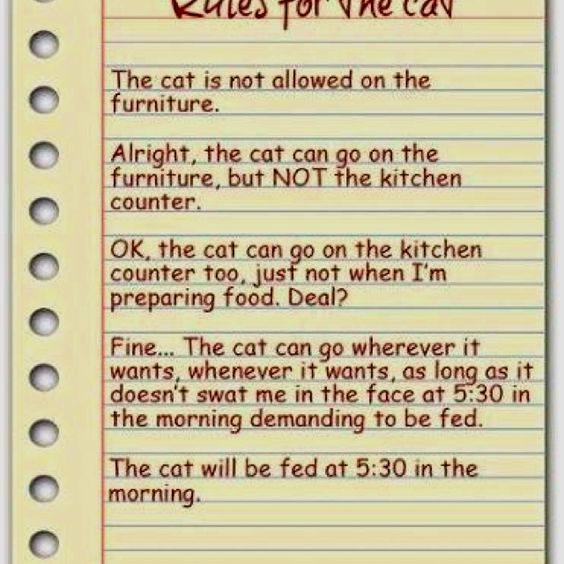 Rules for the Cat.