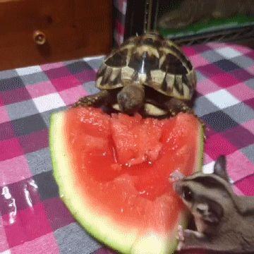 24 Bilder, nach denen Du sofort eine Schildkröte zum Freund willst