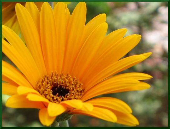 Learn All About Calendula Flower In Malayalam From This Politician Calendula Flower In Malayalam In 2020 Calendula Flower Calendula Flowers