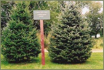 Welcome to Crane Neck Tree Farm