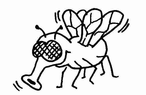 Fliege Ausmalbilder Ausmalbilder Fliege Ausmalbilder Ausmalen Bilder
