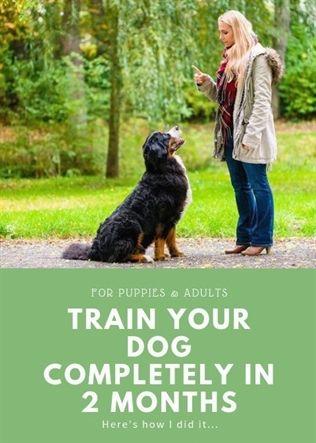 Dog Training Schools Dog Training Over Excited Dog Training