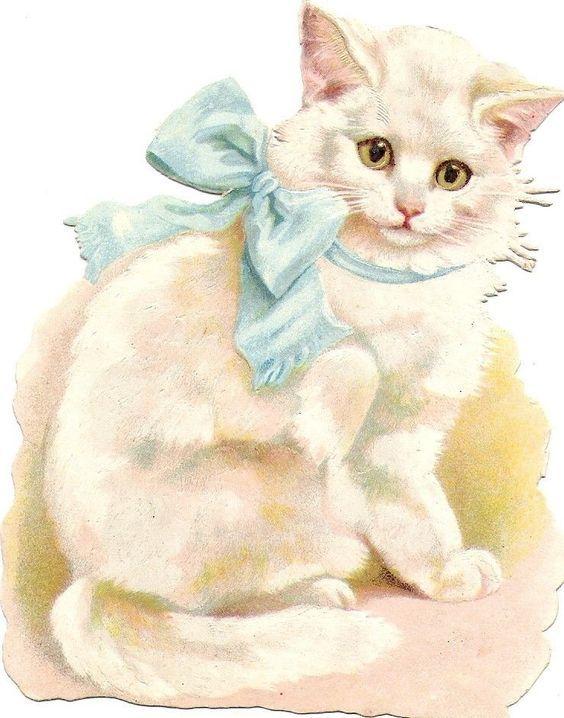 Oblaten Glanzbild scrap die cut chromo Katze white cat Halsband ribbon kitten: