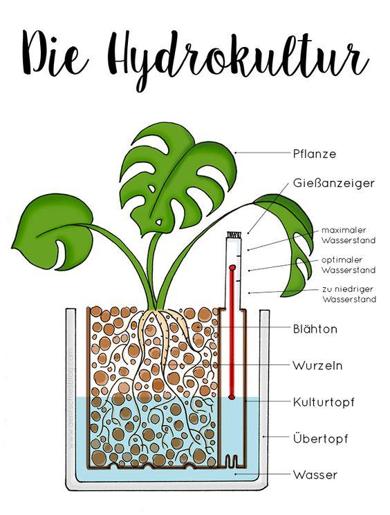 Die besten 25+ Hydrokultur pflanzen Ideen auf Pinterest - indoor garten anlegen geeignete pflanzen
