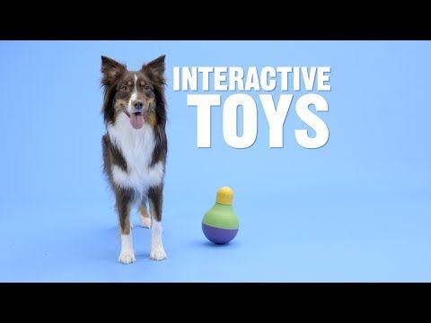 How To Tire Out A Puppy Indoors Interactive Dog Toys Dog Toys