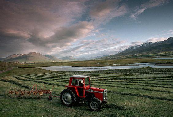Icelandic farm in Akureyri