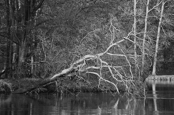 Patrząc na powalone drzewa wielu myśli, że niezły mógłby być z tego materiał na drewno do kominka, na opał. W zasadzie nic w tym złego, ale jeśli patrzy się na to z punktu widzenia szerszego zapotrzebowania to może się okazać, że nie tylko powalone drzewa