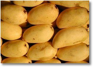 Seniorita mango