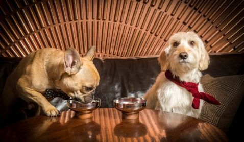 カクテルならぬ ドッグテル を用意 犬と一緒に楽しめるバーがロンドンにオープン Adgang 犬 カクテル 犬の名前