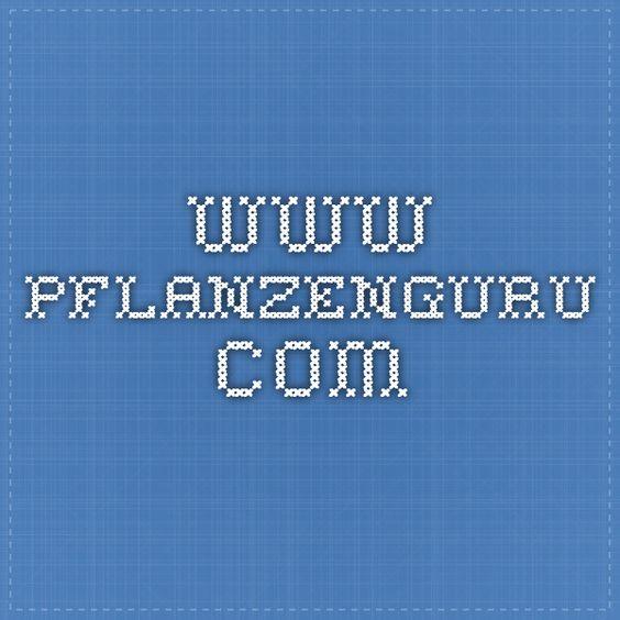 www.pflanzenguru.com