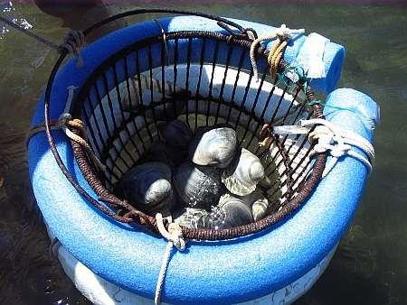 Pinterest the world s catalog of ideas for Floating fish basket