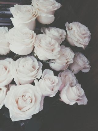"""White? White?!"" Rachel shrieked a bit. ""I said red roses! Not white!"" ""S-sorry your Majesty.."" The royal guard  stuttered a bit. ""W-We accidentally planted the white roses a-and-"" he got cut off. ""Don't give me excuses,"" She snaps. ""These roses better be red. Tomorrow."" She ordered. ""But y-your highness. W-We can't just turn the roses red overnight, they will have to be-"" ""I said they BETTER be RED, TOMORROW."" She barked. ""Or it is OFF WITH YOUR HEAD."" His eyes widened, ""Y-Yes your H-Highne..."