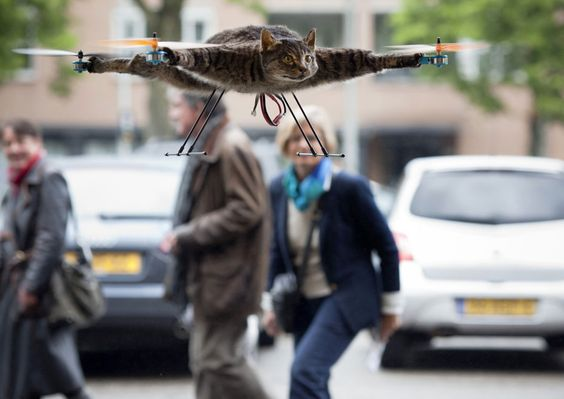 The super controversial Catcopter. This would be so much more impressive if the cat was fake....