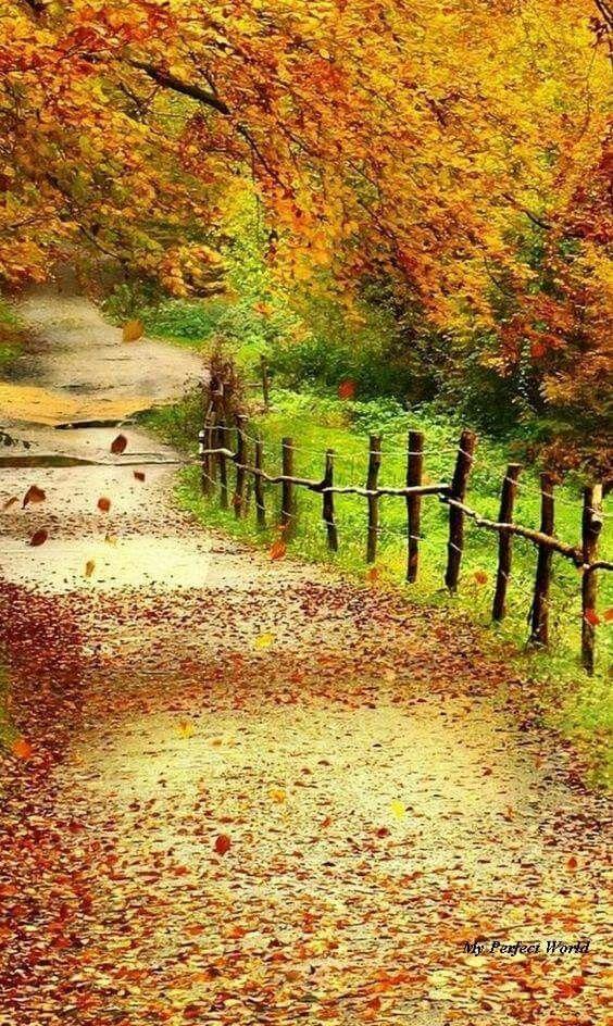 I Ll Wander Down This Path Autumn Scenery Beautiful Nature Scenery Wallpaper