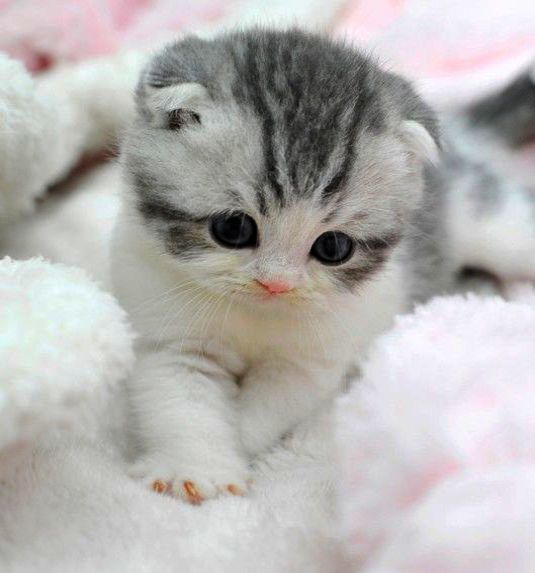 Pictures Of Really Cute Cats And Dogs