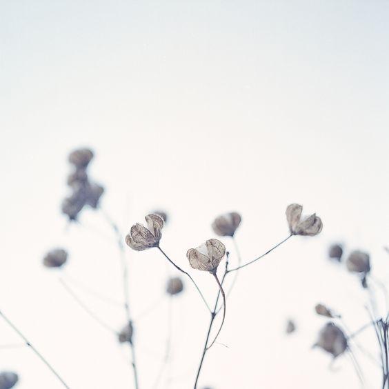 """Wie die ersten Knospen, die im Frühling sprießen, löst dieses zarte Blau-Grau das Gefühl von """"Neuanfang"""" aus. Jeder Pinselstrich mit petal pushers steht für den """"auf in ein neues Abenteuer""""-Spirit, der keiner Trägheit Chancen lässt. petal pushers ist ein wahrer Grenzgänger zwischen Fliederblau und Taubengrau. Und darin liegt die Einzigartigkeit dieser zurückhaltenden, aber dennoch aufregenden Nuance."""