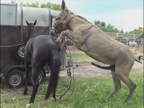 Horse Mating Up Close For a Long Time | Animals Mating ...