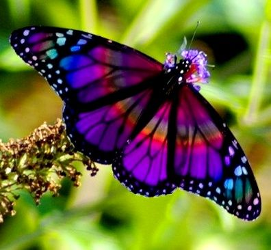 ☜♥☞ butterflies . . . gorgeous colors