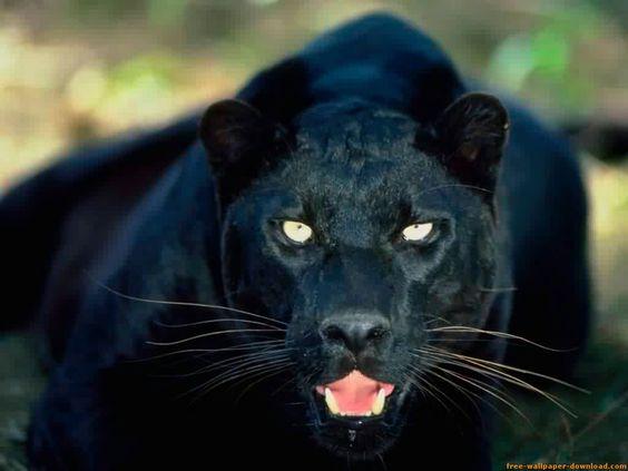 animales salvajes hermosos