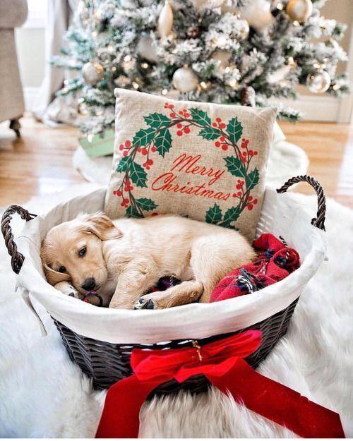 Great Gift For Le Kiddos Christmas Puppy Christmas Dog