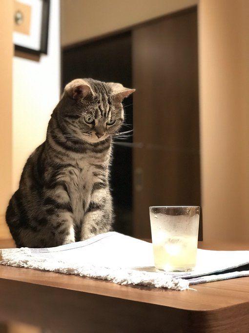 ねこ のアイデア 投稿者 3peisan さん 2020 猫