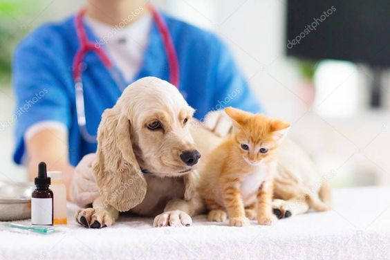Vet With Dog And Cat Puppy And Kitten At Doctor Stock Photo Sponsored Cat Puppy Vet Dog Ad Pet Clinic Pet Wellness Pet Health