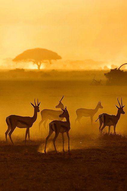 zulke foto's zie ja vaak van herten hier in europa, nu eens andere dieren in n ver, warm land
