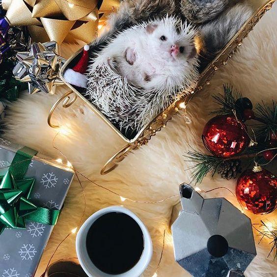 Cozy & Merry. ☺️