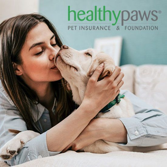Pin By Tara Nitschke On Me 6 Vet Bills Best Pet Insurance Pets