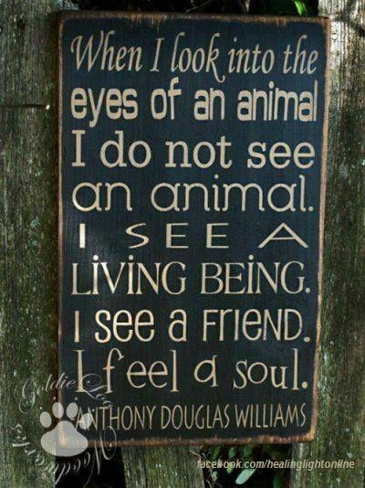 stop animal abuse: