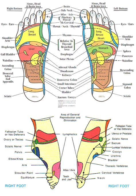 Foot Reflexology Benefits Health For The Whole Body Healthy Happy Long Life