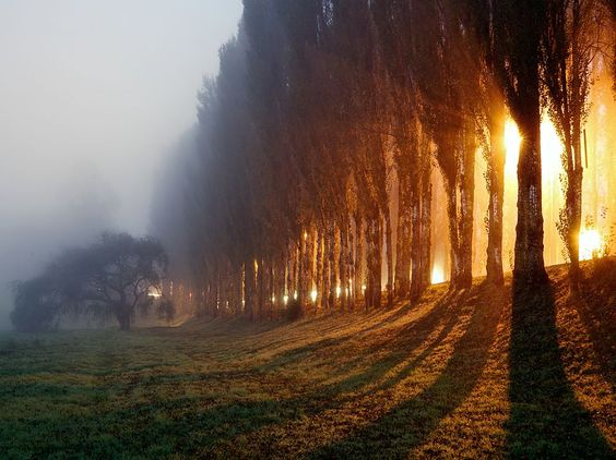 National Geographic: Valdivia, Chile - Photograph by Charles Brooks (Light from streetlights breaks through morning fog in Valdivia, Chile)