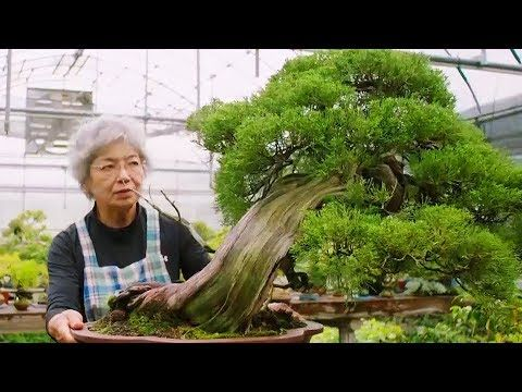 The Oldest Bonsai Trees In The World 世界で最も古い盆栽の木