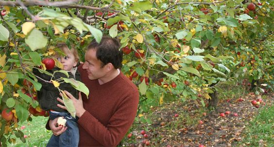 apple orchards in illinois