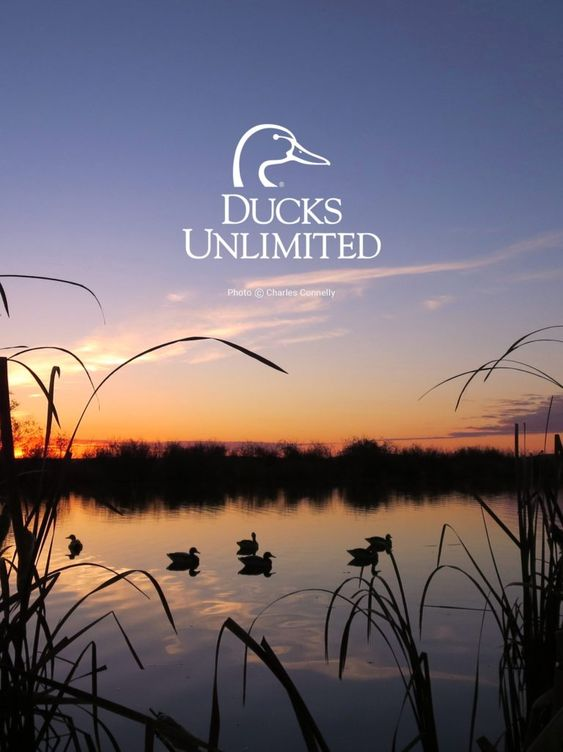 Ducks Unlimited Mobile Wallpaper Hunting Wallpaper Ducks Unlimited Aesthetic Wallpapers Duck hunting wallpaper for iphone