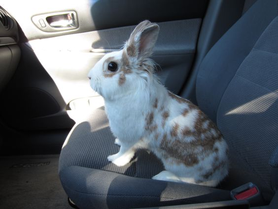 Just going along for the ride!  :)