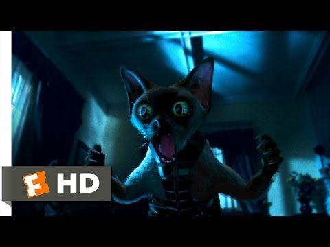 Cats Dogs 3 10 Movie Clip Ninja Cats 2001 Hd Youtube Ninja Cats Dog Cat Dog Movies