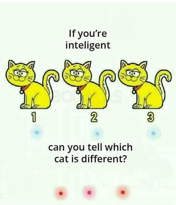 cat lover riddle