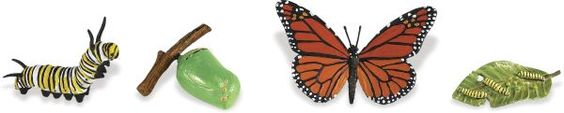 Life Cycle of a Monarch Butterfly (Safariology)   Main photo (Cover)