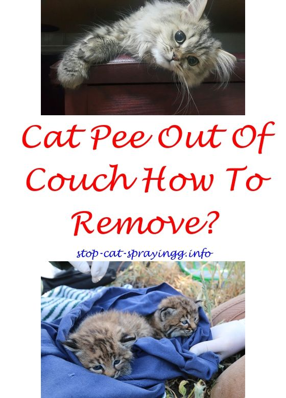 How To Neutralize Cat Urine On Furniture